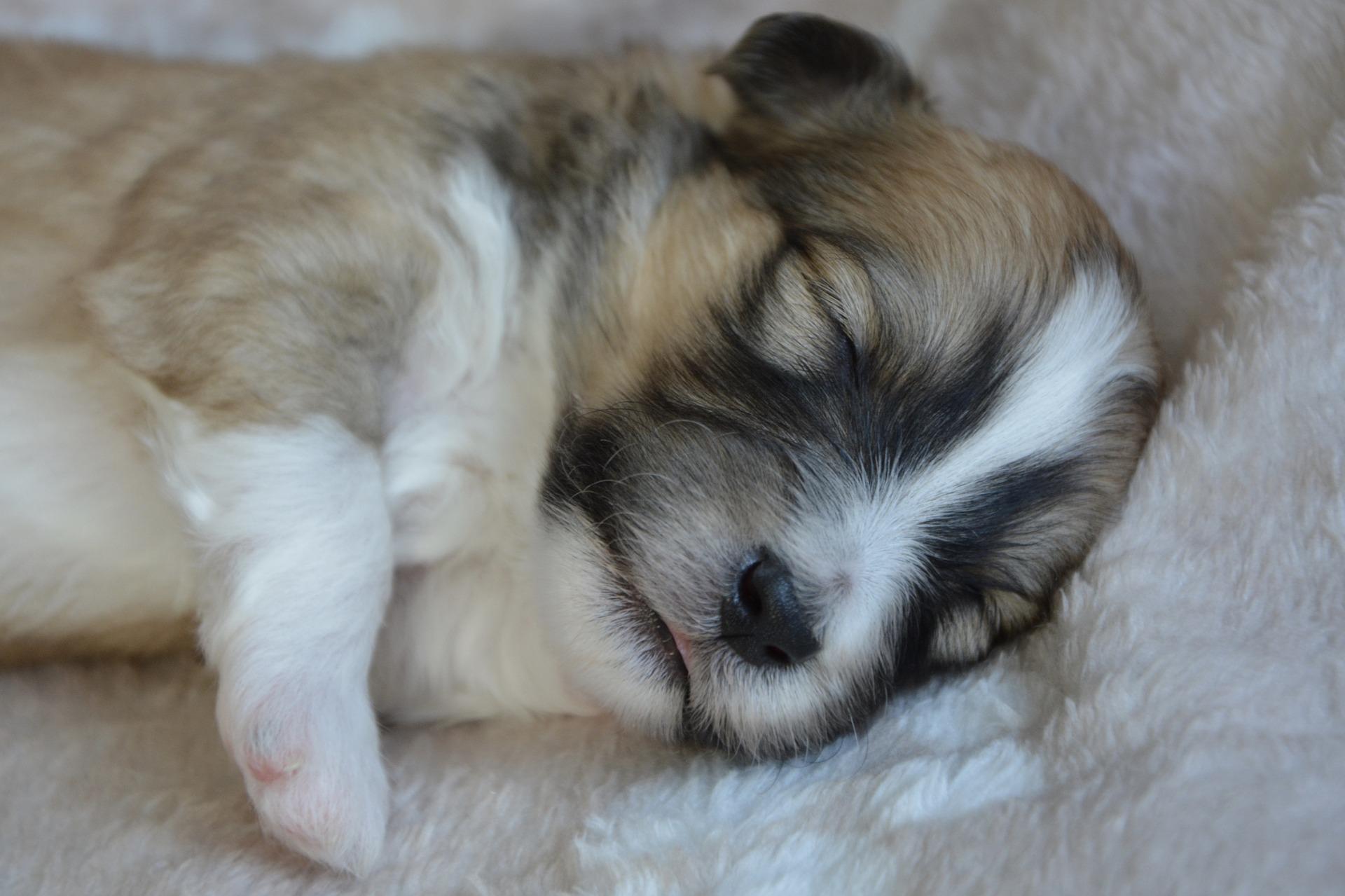 Les chiens rêvent-ils ?
